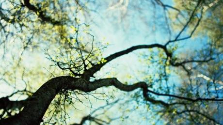 Spring-tree-germination-the-sky-hazy-background-1920x1080
